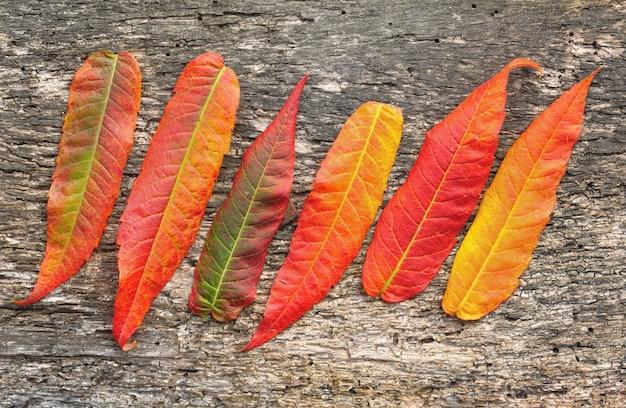 赤と黄色の葉