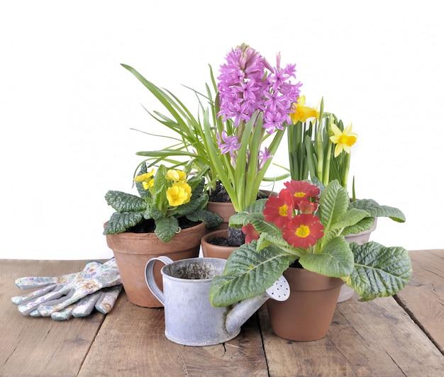 Весенние цветы в горшках на столе