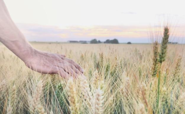 Рука человека в поле