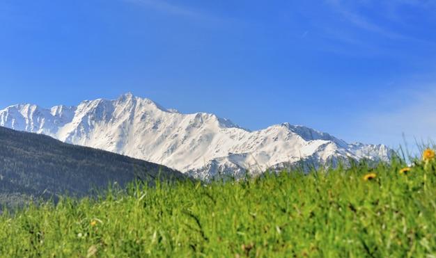 山の春の風景