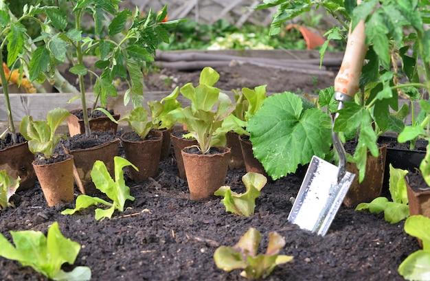 庭の野菜植物の葉の間で湿った土壌に植えるシャベル