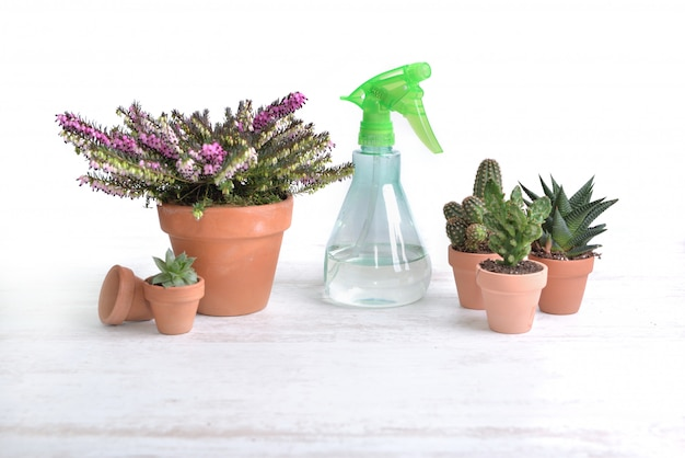 Опрыскиватель среди горшечных растений и кактусов на столе