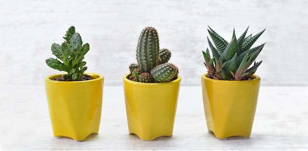 Три маленьких кактусов в желтом горшке на белом столе