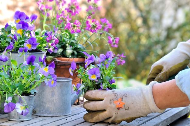 鍋に花を植える