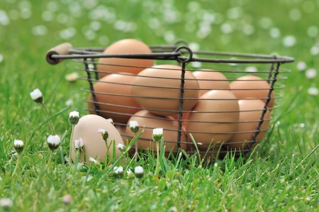 草の中の卵