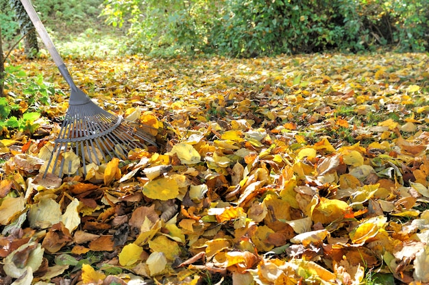 葉のすくい