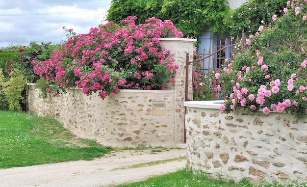 壁にピンクのバラ