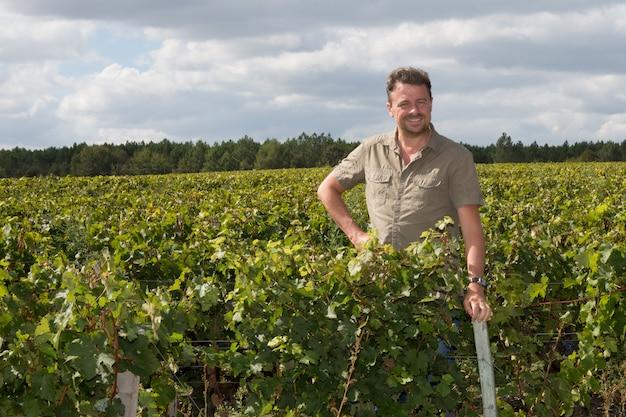 ヴィンテージの間にブドウを調べるワイン醸造業者