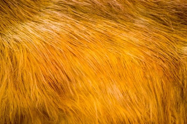 背景、黄色と茶色の動物のテクスチャ