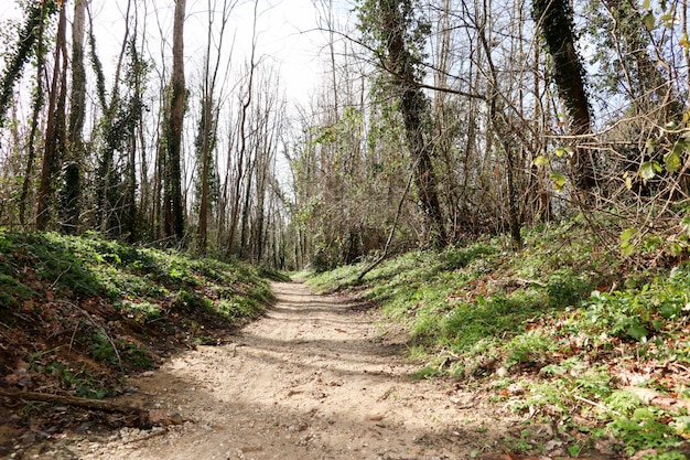 森の緑の木々と歩道車線のパス。夏の森の中の美しい路地