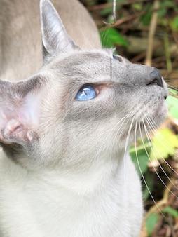 Портрет серый кот с голубыми глазами на открытом воздухе