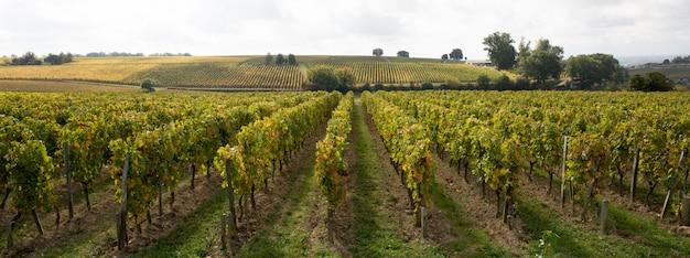 明るく晴れた日に撮影されたブドウ畑のワイナリー行