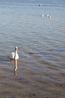白い看板の父と湖で彼の家族が続きます