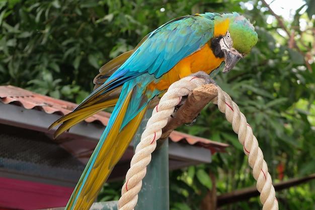Красочный попугай птица сидит на окуня