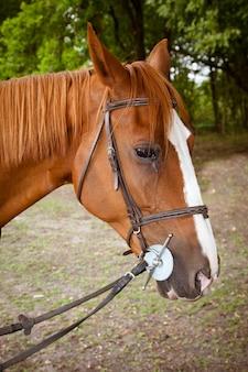 森の中のかわいい馬