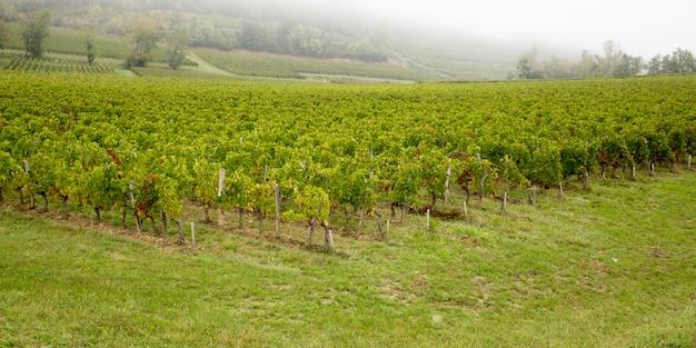 Красивые виноградники на холмах сент-эмильон французское бордоское вино