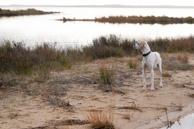 Щенок на песчаном пляже на берегу озера