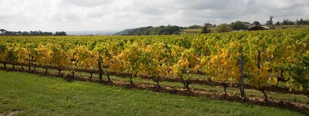 Виноградники франции сент-эмильон-бордо в заголовке шаблона веб-баннера