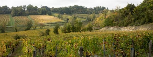 Французские виноградники в деревне сент-эмильон на холме бордо во франции в заголовке шаблона веб-баннера