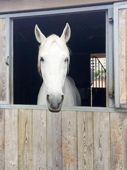 Портрет белой головы лошади в конюшне