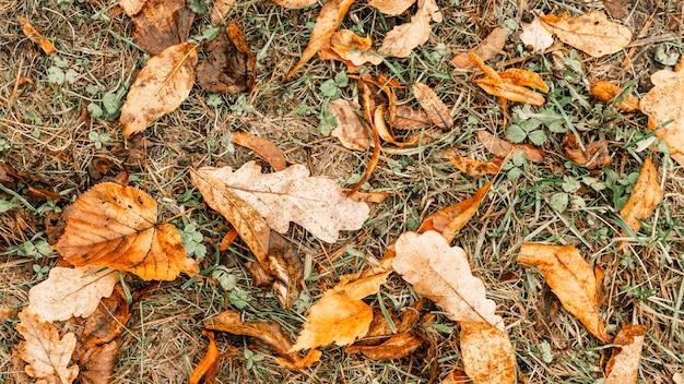 Фоны и текстуры. фон из желтых сухих осенних листьев. осеннее время
