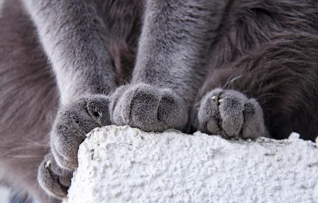 座っている間柔らかい猫の足の詳細ショット