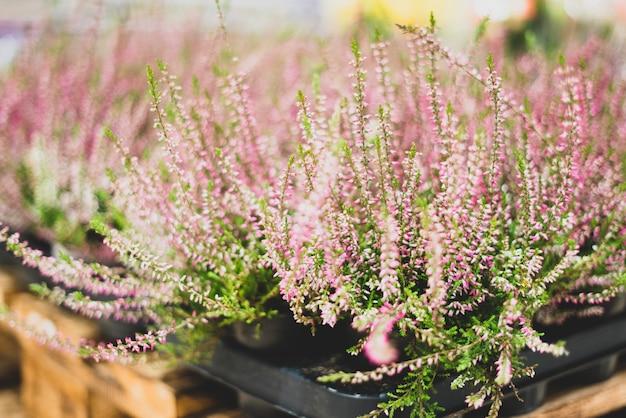 フラワーショップの観賞植物。植物標本および生きている植物。装飾と装飾、ギフト。