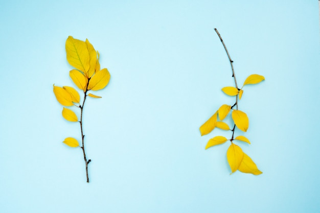 Осенняя композиция, рамка из листьев. две ветки с желтыми листьями, сливы, на голубом фоне.