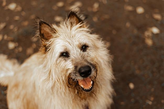 犬を散歩します。動物シェルターからの犬。公園を散歩するテリアの長い髪の犬。ペットケア、ペットの健康。