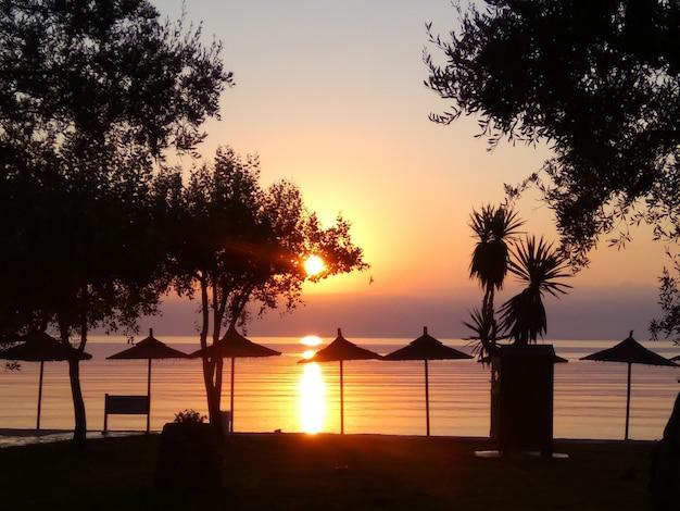 太陽の傘と日の出時にビーチの木のシルエット