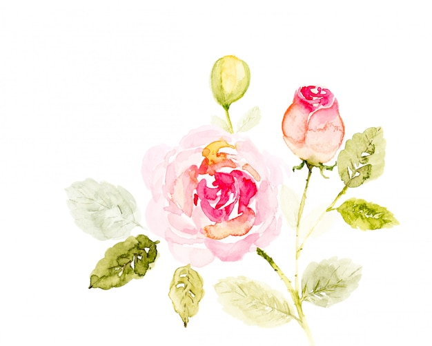 白地にピンクのバラの花束花水彩手描き。