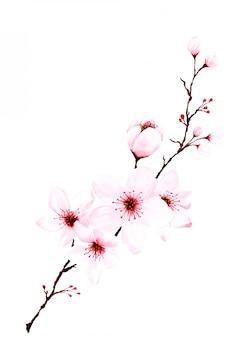 水彩の桜の枝の手描き。