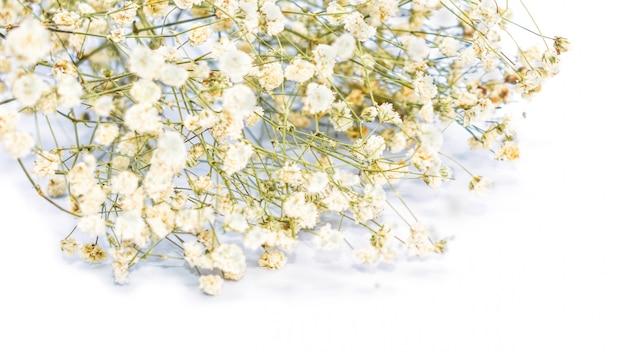 乾燥した白いカスミソウの花の花束