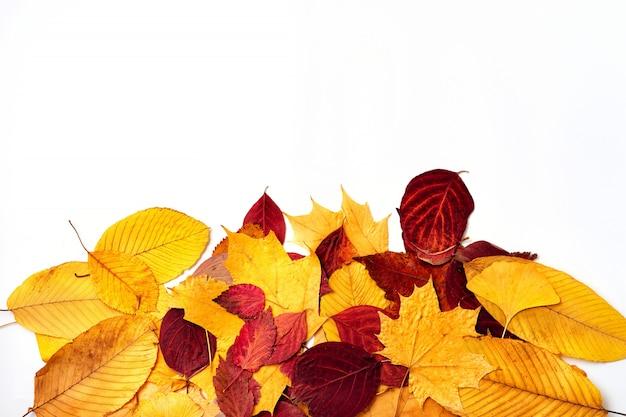 白い背景の上の秋の紅葉のトップビュー