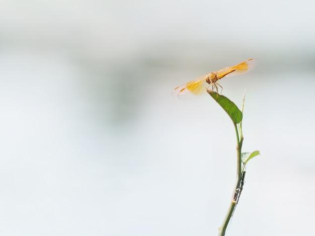 Оранжевая красивая милая стрекоза в болоте на листе
