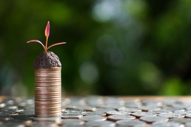 成功へのお金を植える小さな芽とコイン