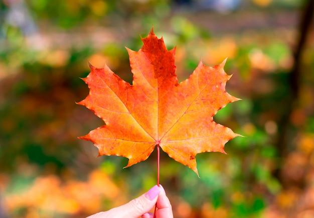 Женщина, держащая одну осень осень оранжевый кленовый лист