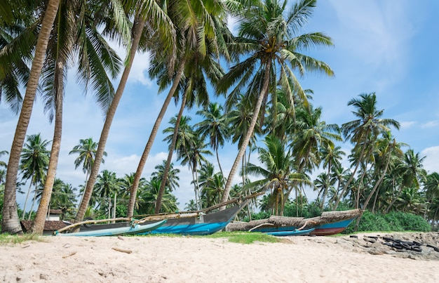 Красивый пейзаж с тропическим песчаным пляжем и старыми рыбацкими каноэ, шри-ланка