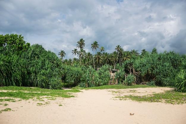 Тропические джунгли с пальмами на берегу океана, с облаками в небе, шри-ланка