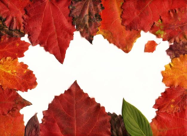 秋の葉の構成フレーム