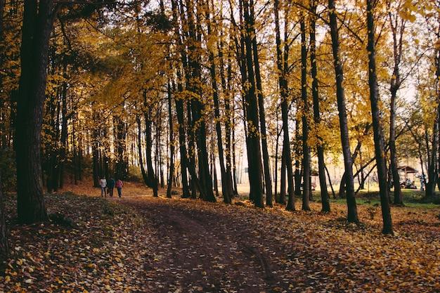 日没、秋の木々と道。