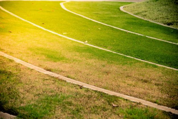 日の出の緑の草。