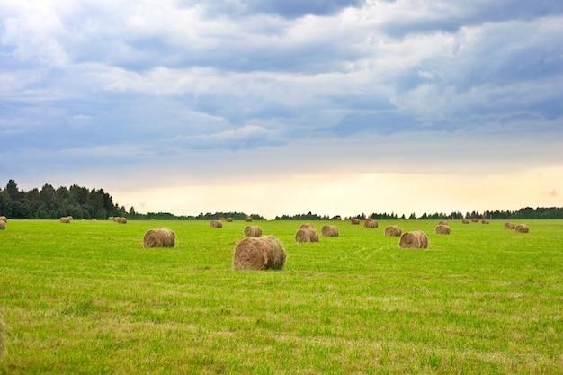 干し草の山ときれいなフィールドの背景に美しい田園風景。日没。