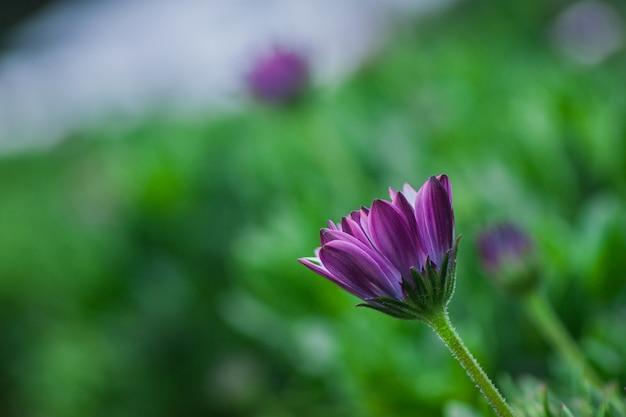 セレクティブフォーカス紫色の花の写真を閉じる