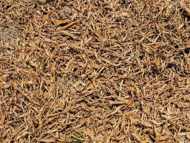地面に乾いた葉の質感が劣化し、有機バイオ肥料に変わります