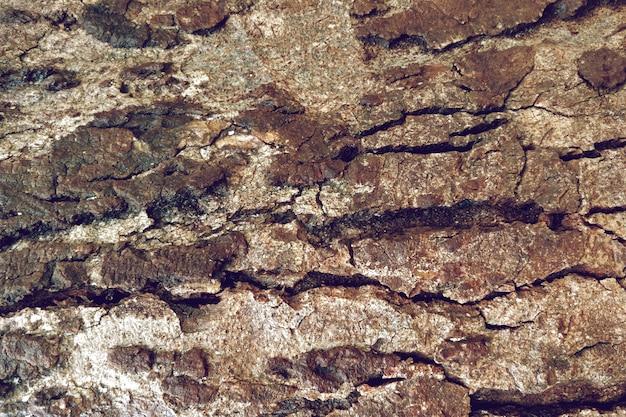 詳細な古い木のテクスチャの背景