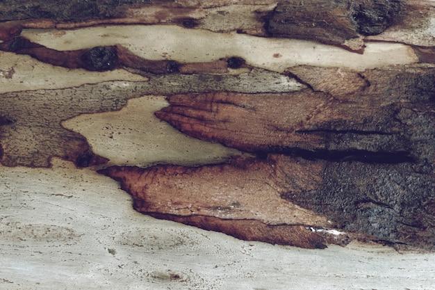木の木のテクスチャの背景