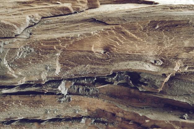 木の木のテクスチャのマクロショット