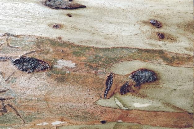 木の木の質感のクローズアップの背景