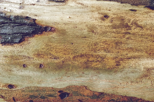 木のテクスチャ背景
